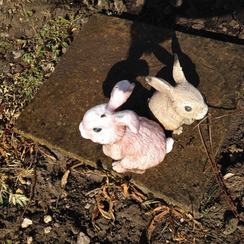 cute little garden rabbits