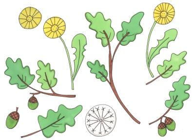 oak and dandelion