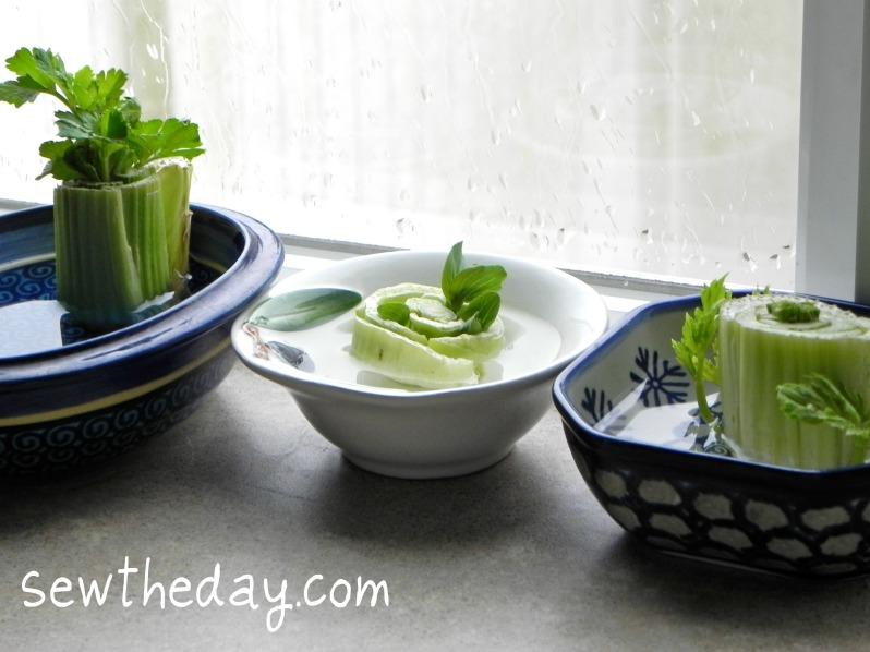 celery1