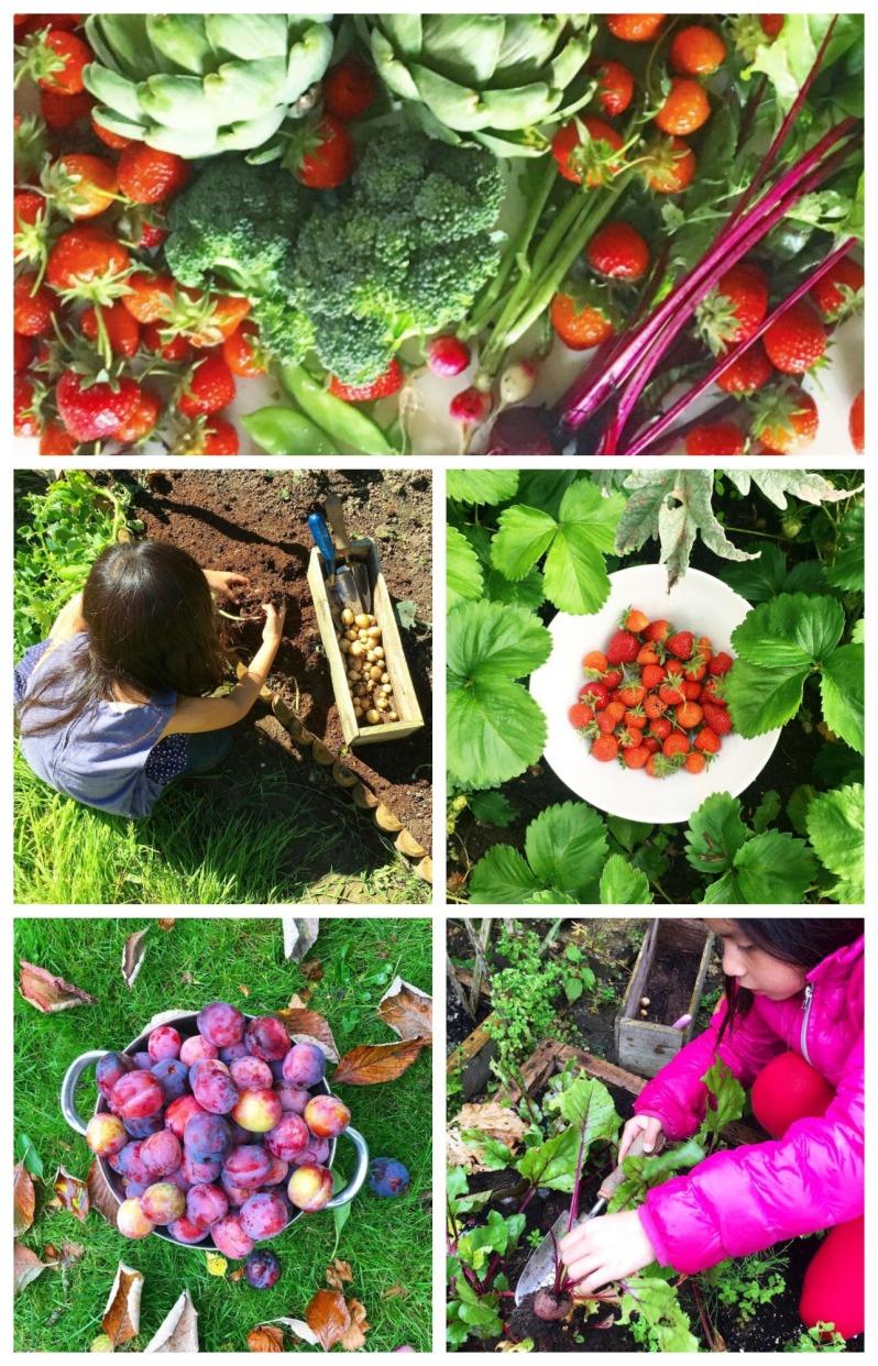 home-grown-fruit-and-veg