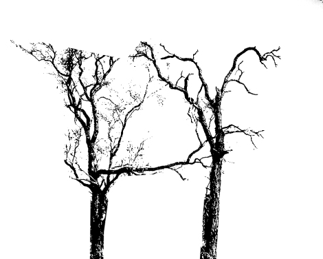 h-shaped-trees